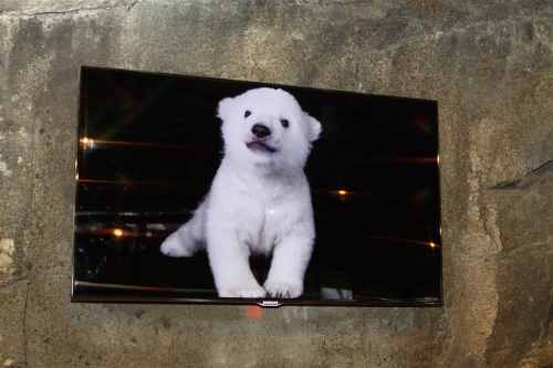 Luna, the three month old polar bear cub is seen on a closed circuit TV monitor