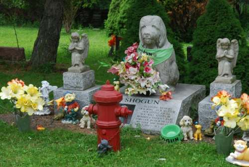 Shogun, a dog remembered