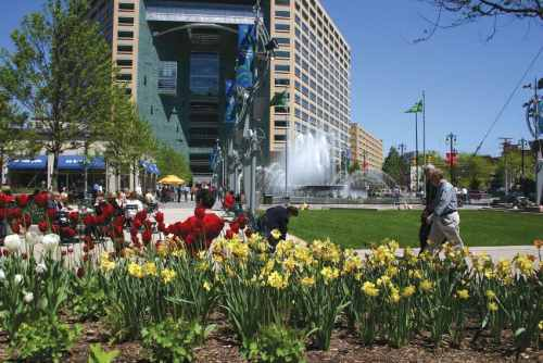 Campus Martius Tulips by DMCVB