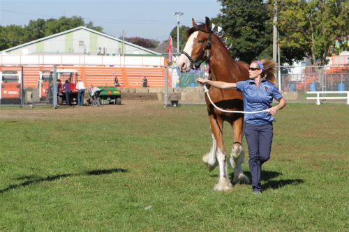 Horses are a big part of any fall Fair