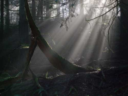 An Enchanting Forest On Pender IslandThe Islands Are Often Enshrouded In Mist