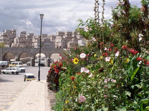The Flora of Sana
