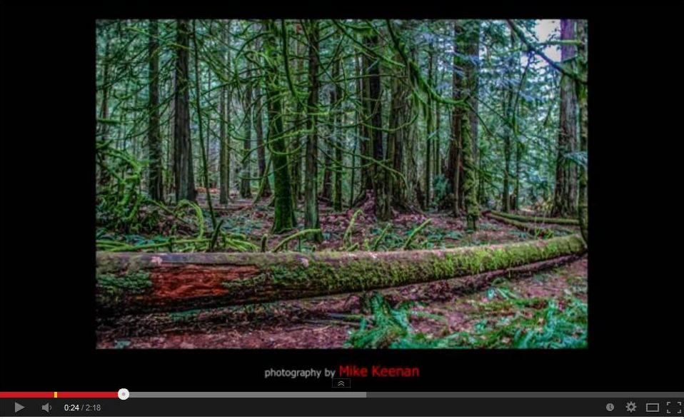 B.C., (Vancouver Island, Cathedral Grove, MacMillan Provincial Park)
