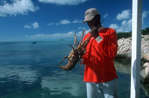 South Caicos Lobster