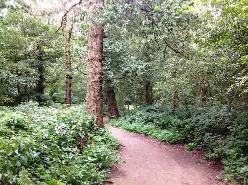 Forest Walk To Temple Newsam House