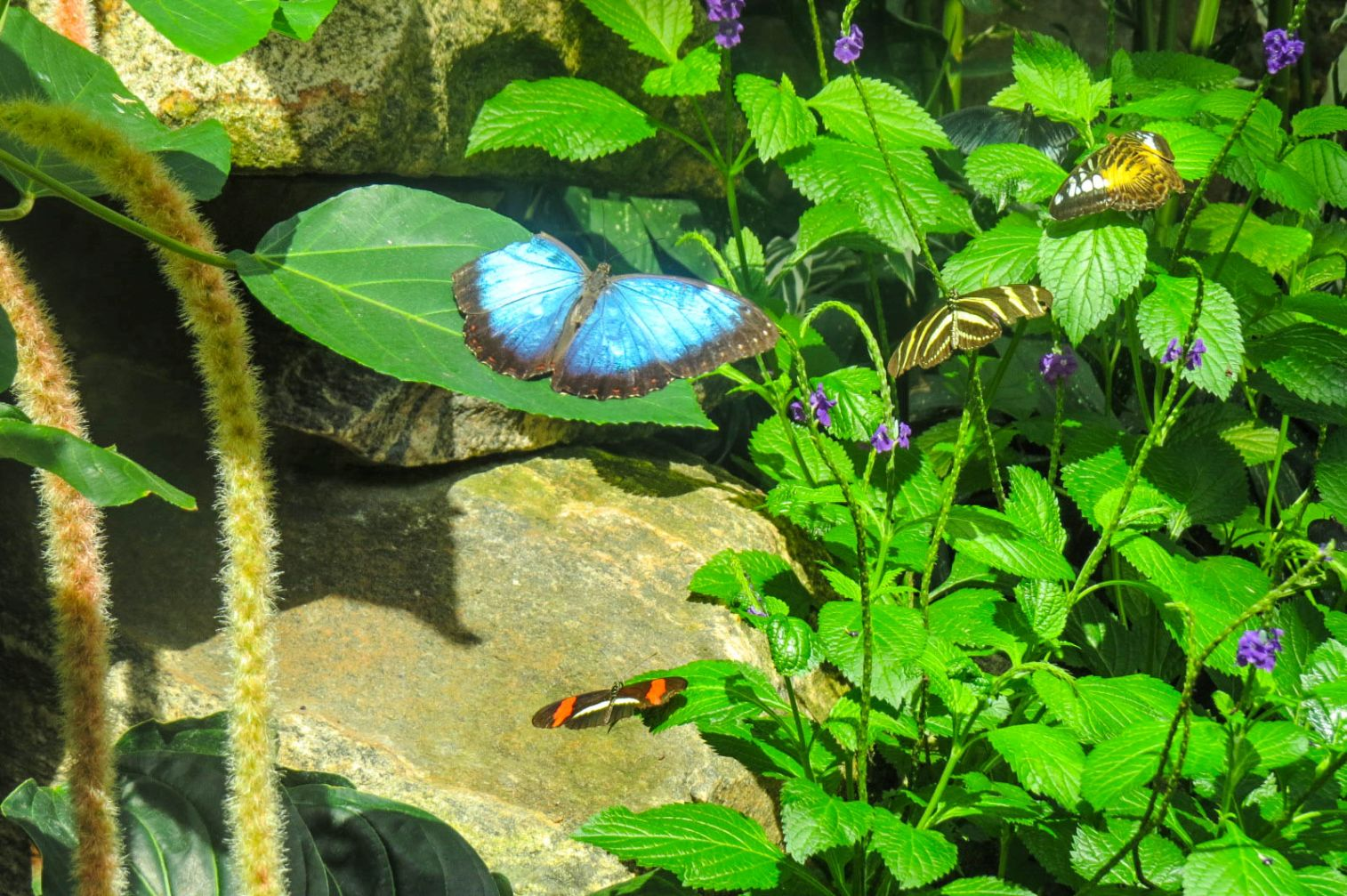 Niagara Parks' Butterfly Conservatory