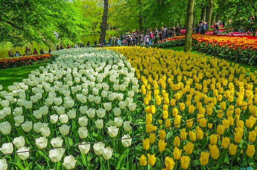 Lisse, Keukenhof Gardens, 70 Acres of Tulips, photo by Mike Keenan