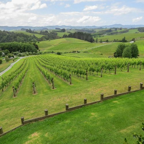 Mahurangi River Winery, New Zealand, photo by Mike Keenan